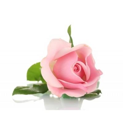 Pink Rose Αρωματικό Έλαιο