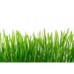 Fresh Grass Αρωματικό Έλαιο