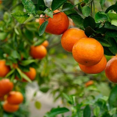 Πορτοκάλι Αιθέριο Έλαιο