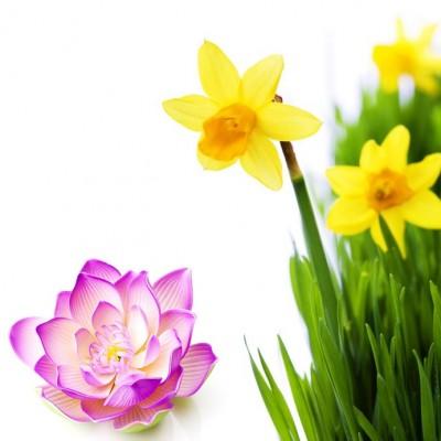Narcissus & Lotus  Αρωματικό Έλαιο