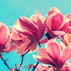 Magnolia and Rose Αρωματικό Έλαιο 50ml