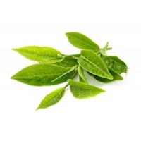 Πράσινο Τσάι Εκχύλισμα 50ml