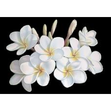 Monoi de Tahiti Λάδι (Έξτρα Ενισχυμένο)