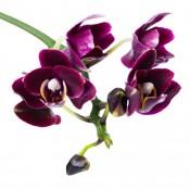 Λουλούδια - Βότανα