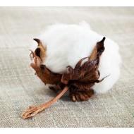 Cotton Flower Αρωματικό Έλαιο