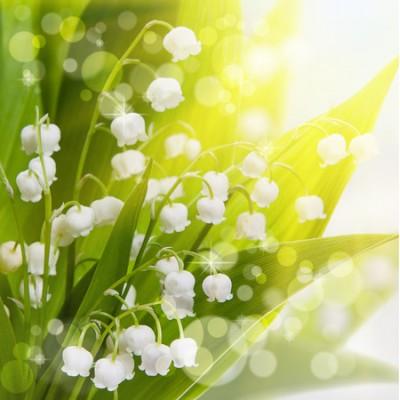 Luxury Lily Αρωματικό Έλαιο