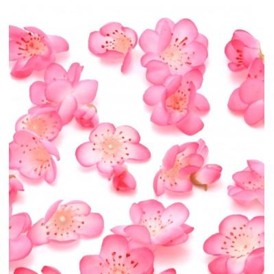 Vanilla and Plum  Blossom Αρωματικό Έλαιο