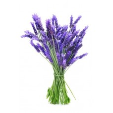 Lavender Αρωματικό Έλαιο